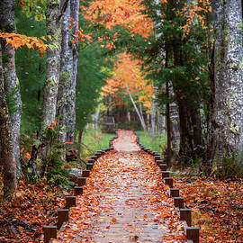 Autumn At Jesup Path by Jesse MacDonald
