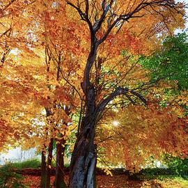 Autumn Blaze by Bill Wakeley