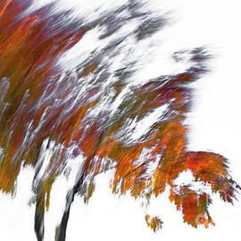 Autumn Breeze by Claudia Cooper