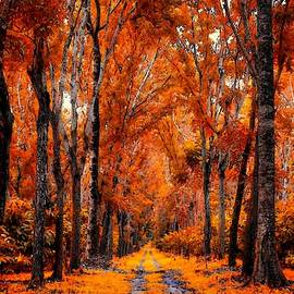 Autumn Ceders At Hillviewhurst L A S by Gert J Rheeders