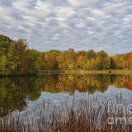 Autumn Clarity by Rachel Cohen