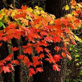 Autumn Color Burst  by Lori Frisch