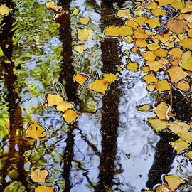 Autumn colors. White Water by Guido Montanes Castillo