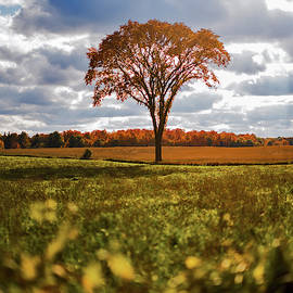 Autumn Elm Tree by Dustin Goodspeed