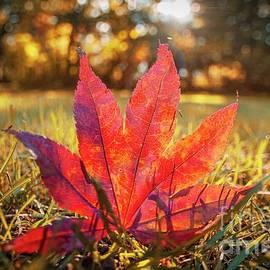 Autumn fingers by Steve Merglewski