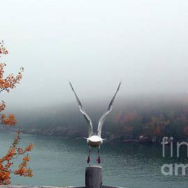 Autumn Flight  by Steven Digman