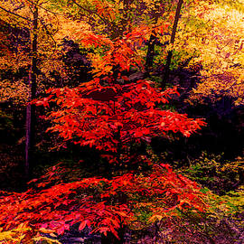 Autumn Forest Abstract by Debra and Dave Vanderlaan