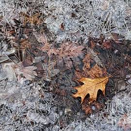 Autumn Freezing Over by Larry Ricker