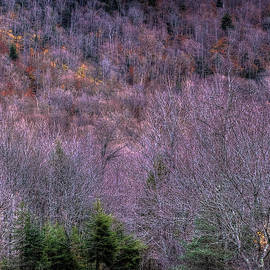 Autumn Hillside by David Patterson
