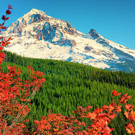 Autumn In Lolo Pass Mt. Hood National Forest by Dee Browning