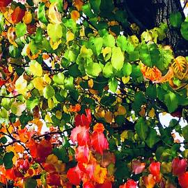 Delicious autumn by LizTa Gallery