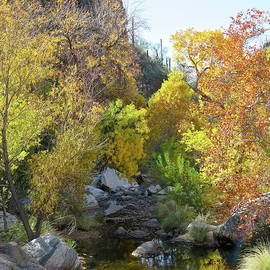 Autumn in the Creekbed by Bonnie See