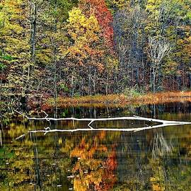 Autumn Landscape Reflecting in a Pond by Frozen in Time Fine Art Photography