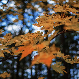 Autumn Leaves 2 by Dustin Goodspeed