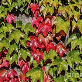 Boston ivy in the fall by Bernd Laeschke
