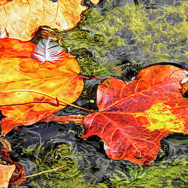 Autumn Leaves by Susan Hope Finley