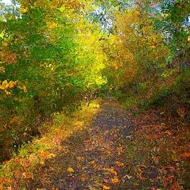 Autumn Light Trail In Van Gogh Style by Christopher Shellhammer