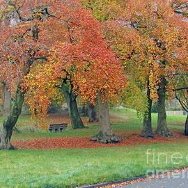 Autumn Morning by Kim Tran
