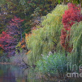 Autumn, My Favorite Season by Dora Sofia Caputo Photographic Design and Fine Art