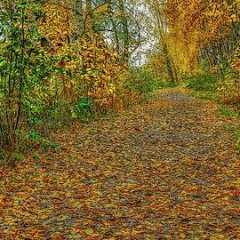 Autumn on path #j2 by Leif Sohlman