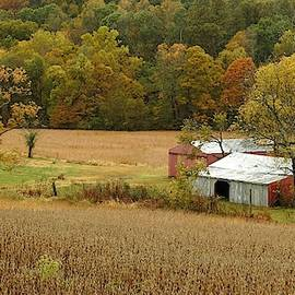 Autumn on the Farm in Shawnee National Forest by Carmen Macuga