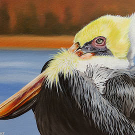 Autumn Pelican by Phyllis Beiser