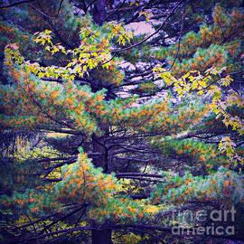 Autumn Pine by Frank J Casella