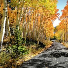 Autumn Roads by Donna Kennedy