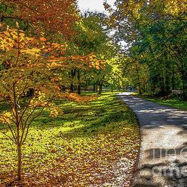 Autumn Shadows Walkway Painterly by Jennifer White