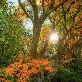 Autumn Star by Judi Kubes