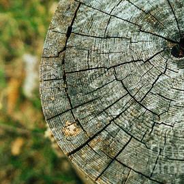 Autumn Stump by Shawn Smith