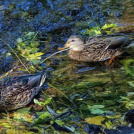 Autumn Swim by Alana Thrower