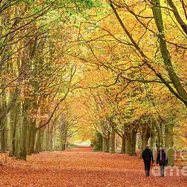 Simon Bratt Photography LRPS - Autumn walk in the woodland