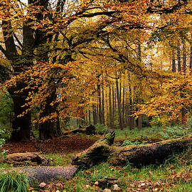 Autumn Wood by Fergal Gleeson