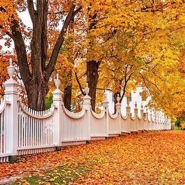 Autumnal Carpet - Vermont by T-S Photo Art