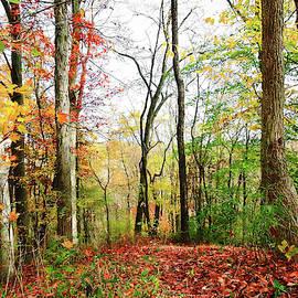 Autumnal Splendor by Susan Hope Finley