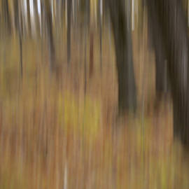 Autumnal Trunks by John Meader