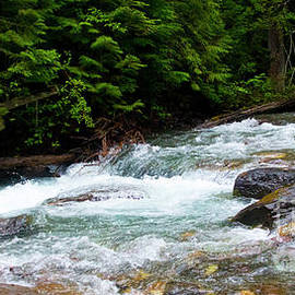 Avalanche Creek-5283 by Gary Gingrich Galleries