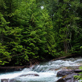 Avalanche Creek-5286 by Gary Gingrich Galleries