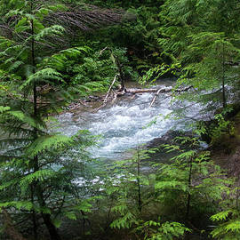 Avalanche Creek-5319 by Gary Gingrich Galleries