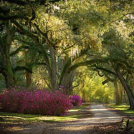 Avery Island Pathway by Jean Noren