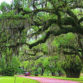 Avery Island Spanish Moss Trees  by Chuck Kuhn