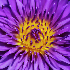 Awakening Water Lily by Wes and Dotty Weber