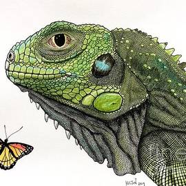 Baby Butterfly Iguana by Graham Wallwork