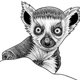 Baby ring tailed lemur - ink illustration by Loren Dowding