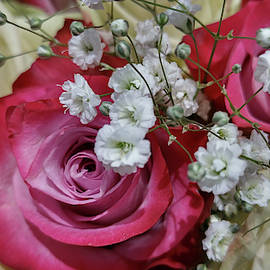 Baby's Breath And Roses by Liza Eckardt