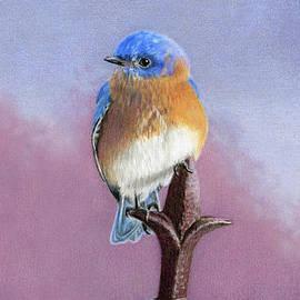 Backyard Bluebird- Vertical Format by Sarah Batalka
