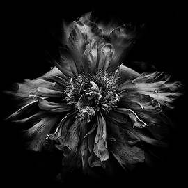 Backyard Flowers In Black And White 49 by Brian Carson