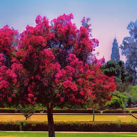 Balboa Park View by Claude LeTien