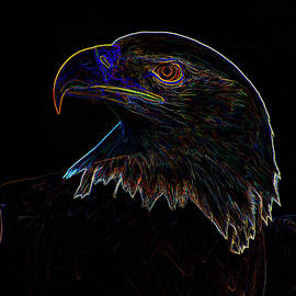 Bald Eagle Digital Art by Chris Flees